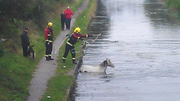 Firefighters throw a rope to the stranded horse