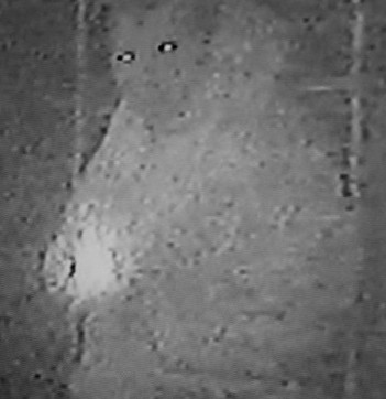 CCTV image of the burglar caught on camera inside the home of Doug and Veronica Quipp eating from their fridge