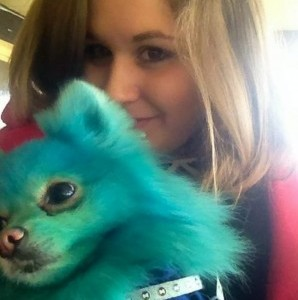 Harvey Moon the Pomeranian dog, from Bournemouth, with his owner Stephanie Mariam, who dyes his fur bright colours
