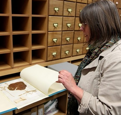 A researcher looks over seaweed and fungi samples collected by Charles Darwin nearly two hundred years ago, that have now been recently discovered