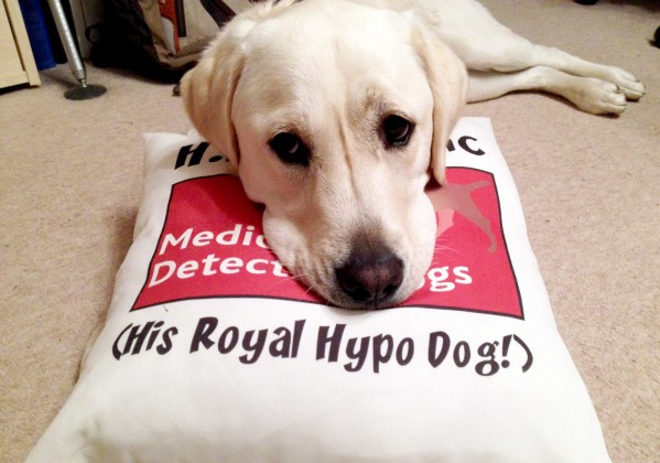 Claire Pesterfield's dog Magic, who helps her detect when her glucose levels are too low