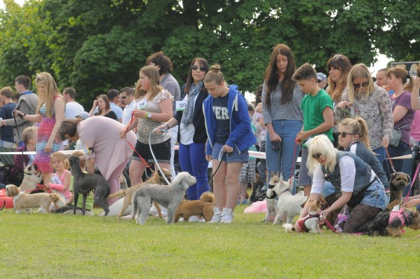 Pet owners taking part in the Higham Dog show in Kent before trouble started