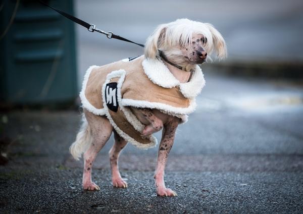 Paul's dog Albie dressed in a Nazi costume