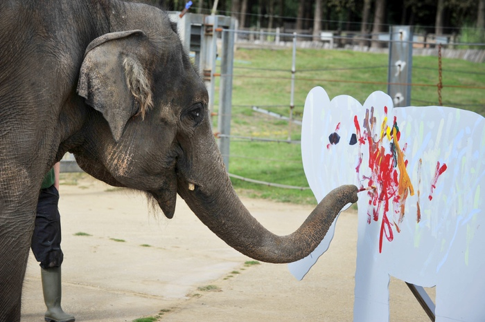 Fourteen-year-old Asian elephant Karishma uses her trunk to decorate wooden elephants with colourful splashes of paint