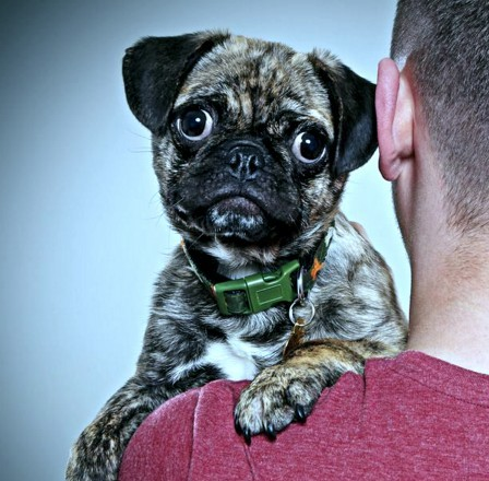 The UK's most photographic animal has been named - as this adorable pet pug called Rylo