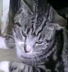 The poor cat emerges from the tumble dryer, thankfully still alive after the sick stunt