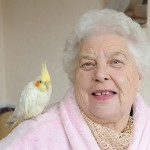 Madge Morris, 80, with Georgie the cockatiel, who flew home after recognising Madge's pink dressing gown