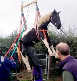 Jester the stricken horse who is winched to safety after getting trapped on a farm gate whilst trying to jump it
