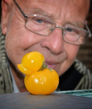George Wall, from Monkmoor, Shropshire with one of the duck shaped tomatoes