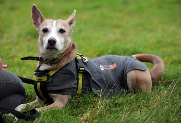 Bonnie at the Dogs Trust Rehoming Centre in Glasgow where she has been branded Britain's wimpiest dog