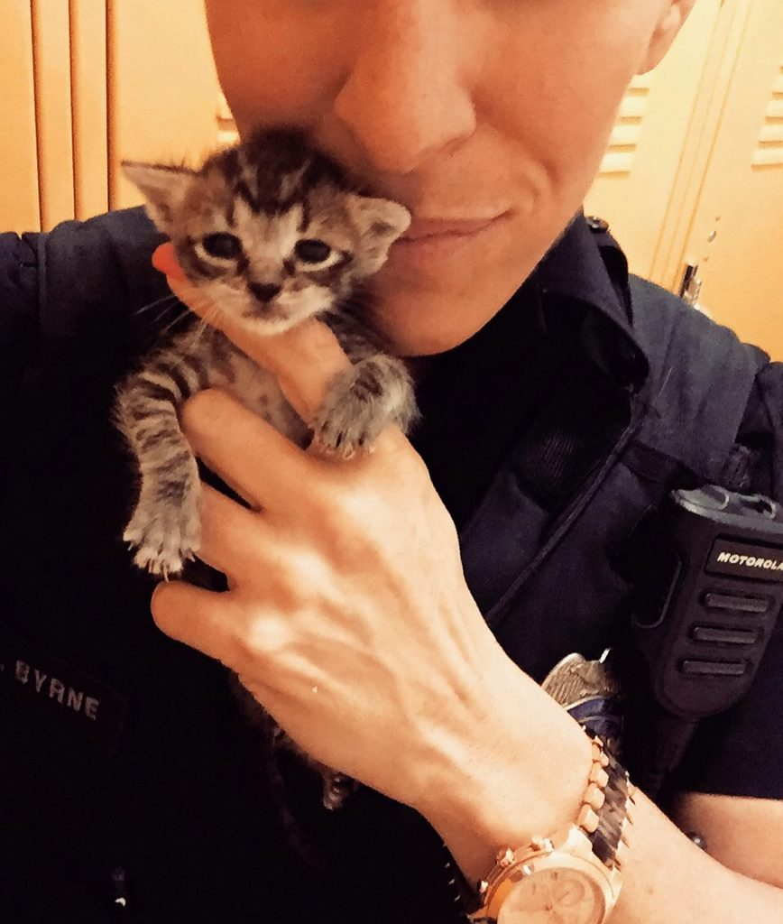 This is Gretchen Byrne the kindhearted cop who feeds stray cats while out on patrol - and ended up rescuing more than 60 of them