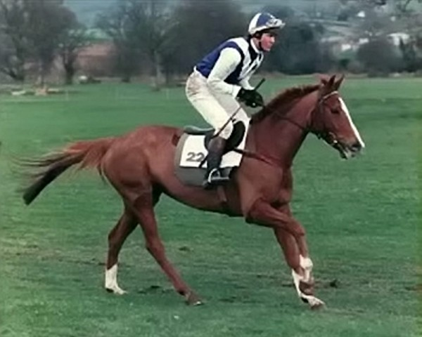 Father-of-two Philip Scholfield, 55, riding in the 1980s during his time as a champion jockey