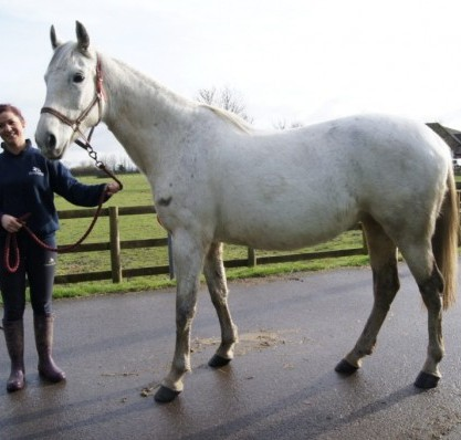 Desert Orchid's cousin Cressida after making a recovery from starving neglect
