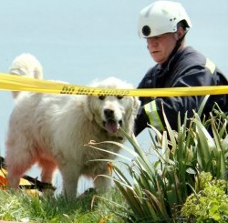 The dramatic rescue of Sam the golden retriever, who fell 250ft down a cliff and walked away unscathed