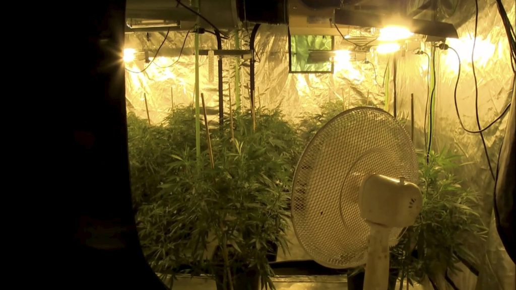This police bodycam footage captures the interior of a cannabis factory in a residential house - complete with a hemp-themed DUVET cover.