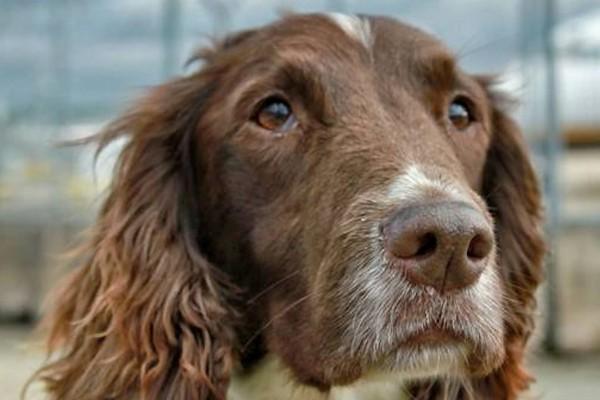 Megan is Britain's most successful drug's dog