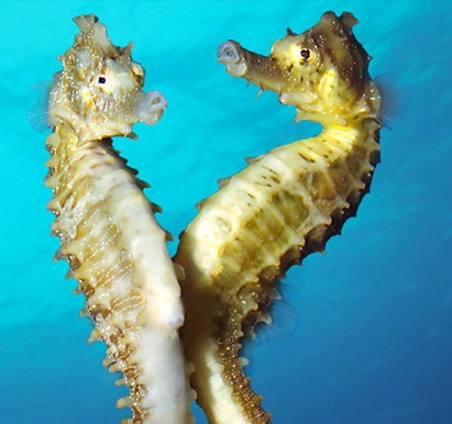 A seahorse similar to those sold on eBay