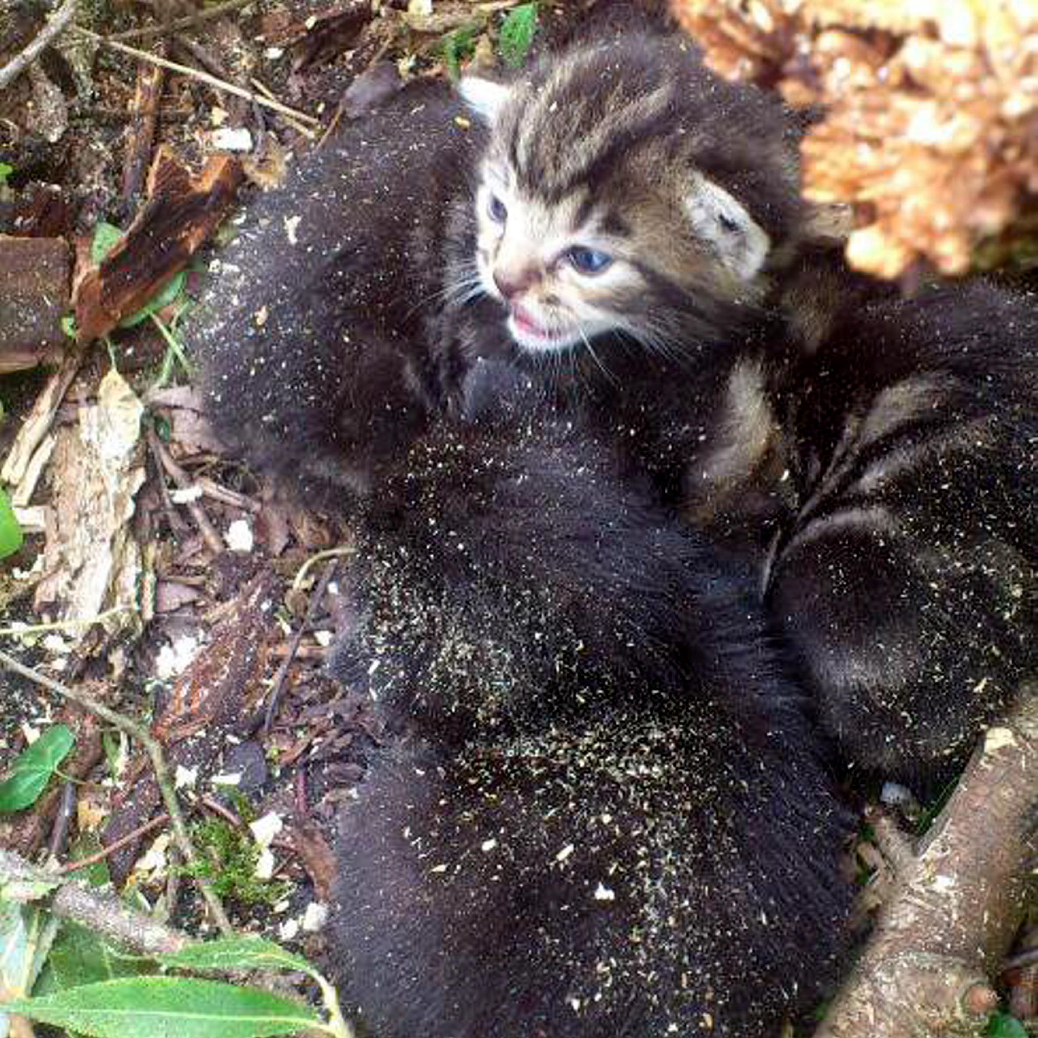 The three homeless kittens inside the tree moments before it was about to be felled