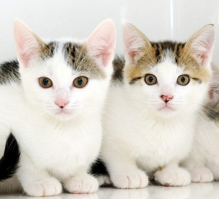 The three surviving kittens rescued from a BBQ