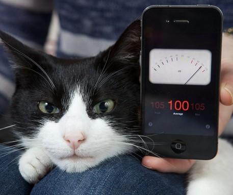 World's loudest cat Merlin whose purr measures 100 decibels