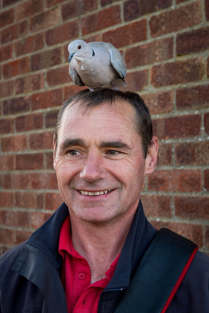 Collared Dove called Ringo among other names with postman David Chamberlain age 53
