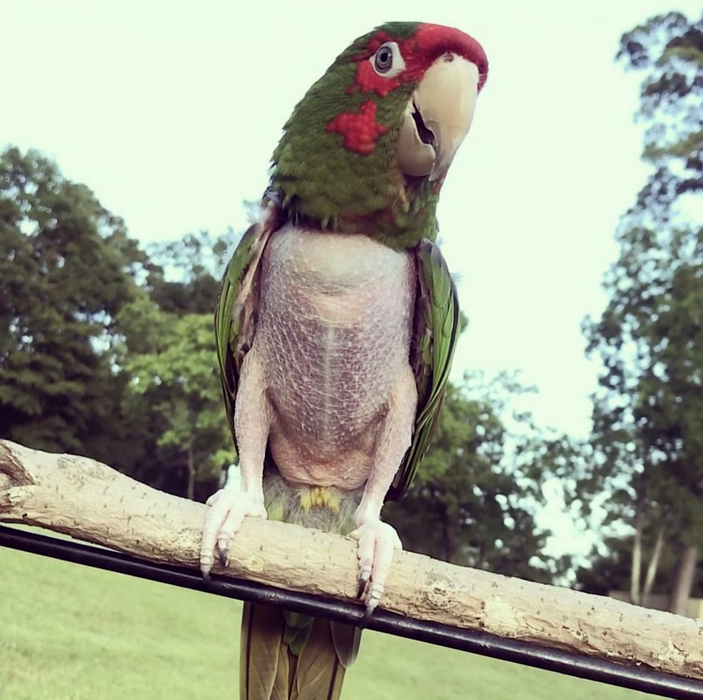 SWNS_PTSD_PARROT_06