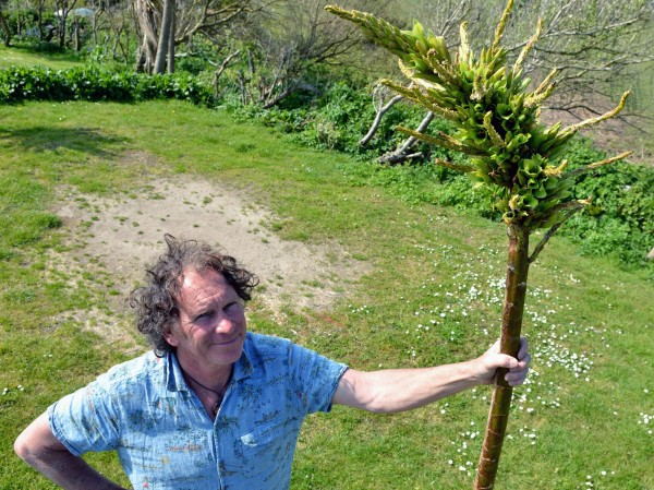 Ron Lyne, owner of Henry's Campsite looks at the Puya Chilensis which is growing on his land