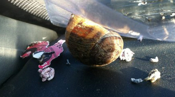 The snail on the dashboard of the van