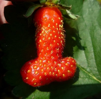 The penis shaped strawberry discovered by Carole Collen