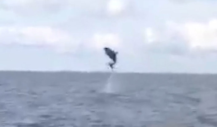 This incredible video shows the moment a dolphin did its best flying impression - by jumping several metres into the air.
