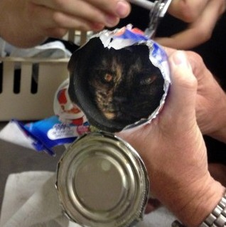 Firefighters rescued this pet from cat-astrophe when they removed its head wedged in a cat food tin