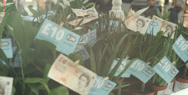 The free money on the plants