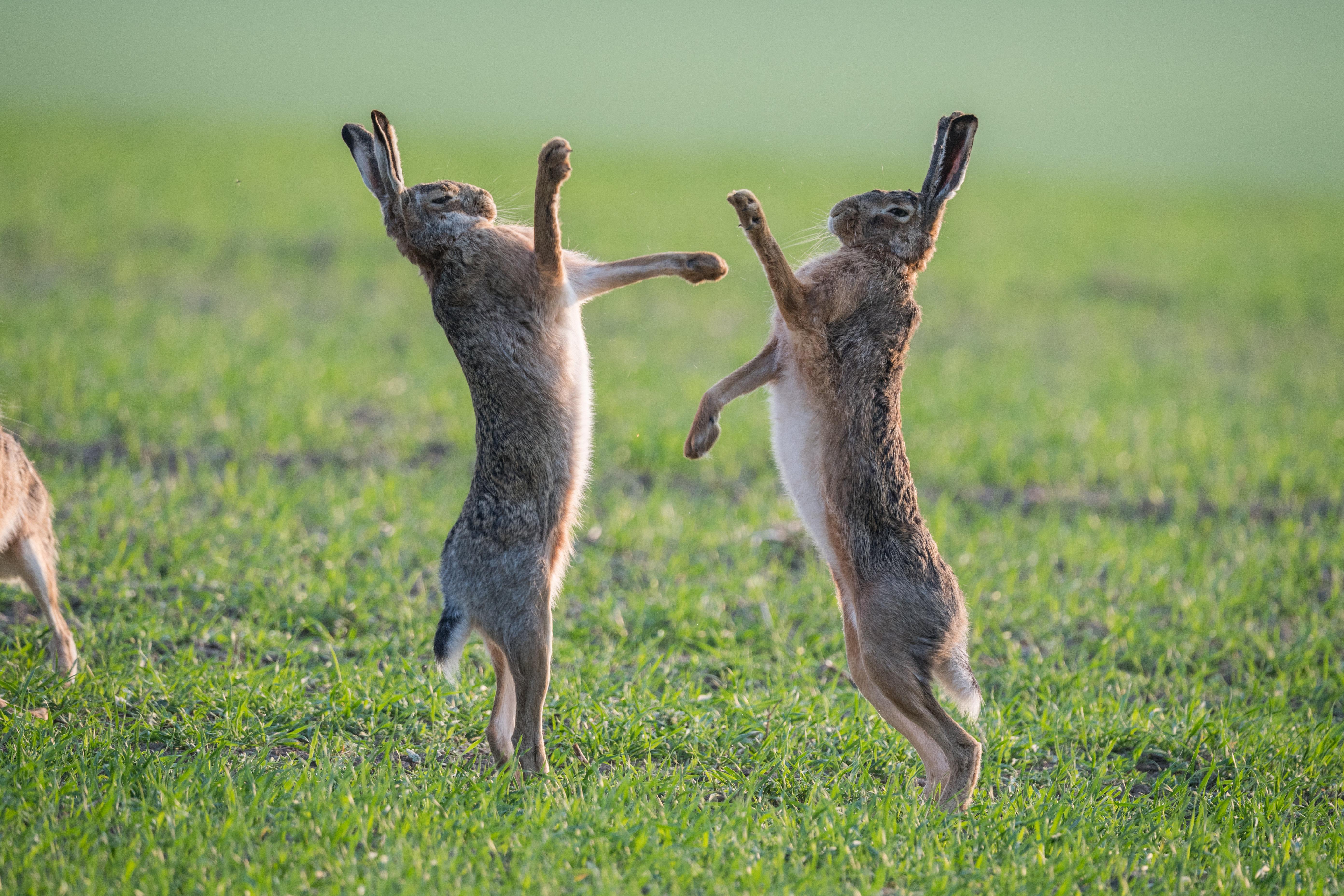 Нужны картинки заяц прыгает около