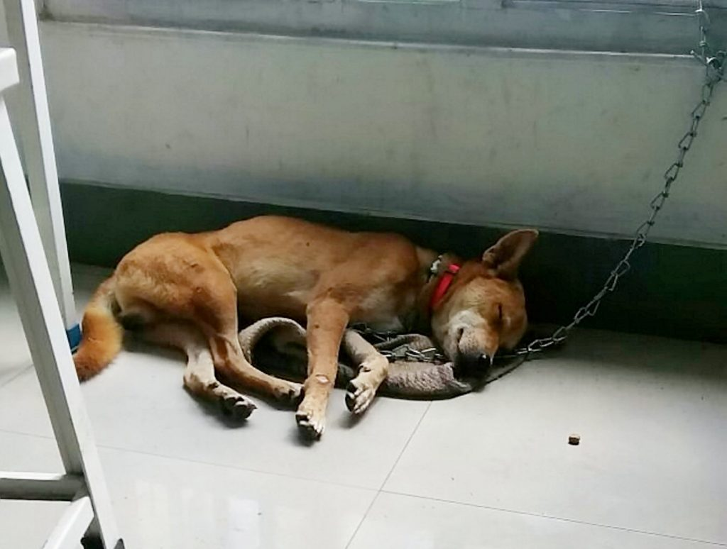 After being rescued.
