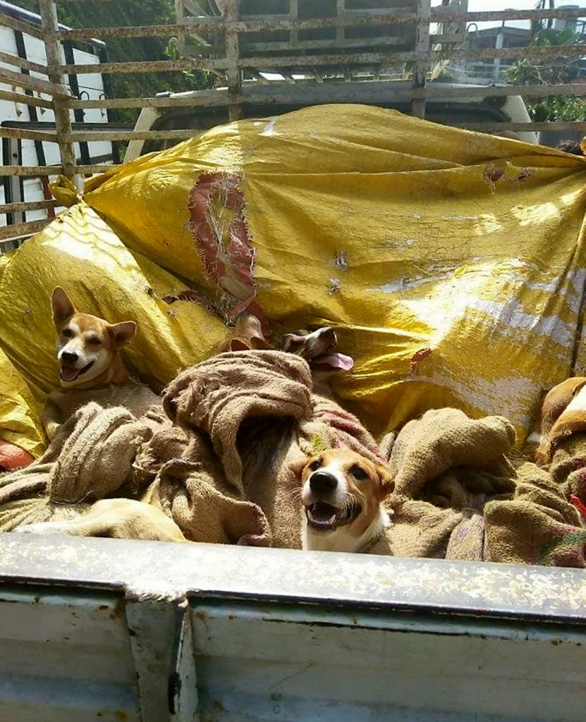 The dogs before being rescued.