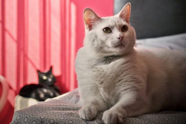 Fat cat: Is pet obesity increasing?
