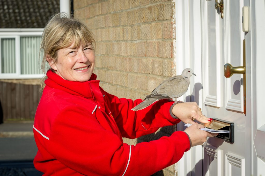 Collared Dove called Ringo who is feared to be stolen with postwoman Alison Preston age 51.