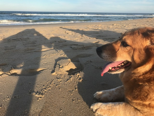 Strudel at the beach.