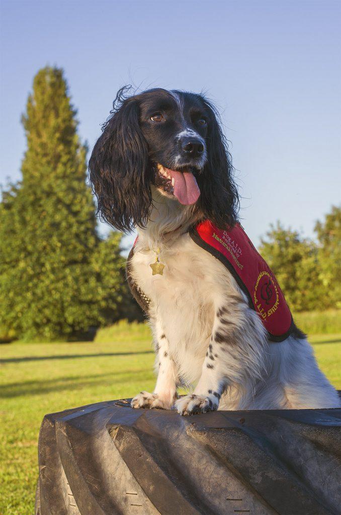 top-dog-a-teena-53719